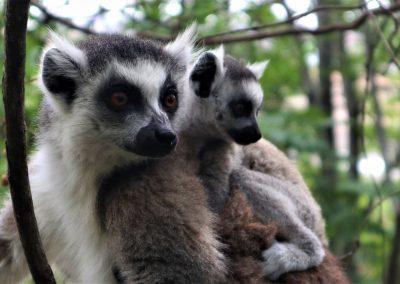 Madagaskar5