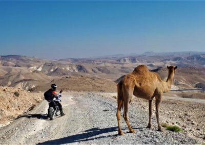 KameliIsrael